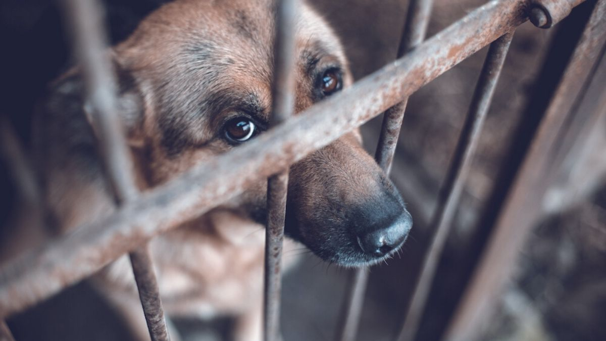 Dog on a Cage   President Trump Signs Bill Making it a Felony to Be Cruel to Animals   Featured